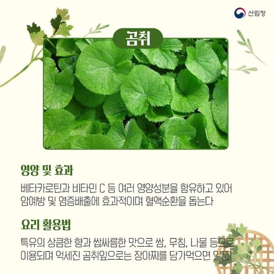 봄기운에 몰려오는 춘곤증을 예방하는 봄나물 5가지_곰취
