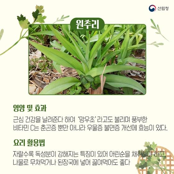봄기운에 몰려오는 춘곤증을 예방하는 봄나물 5가지_원추리