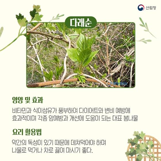 봄기운에 몰려오는 춘곤증을 예방하는 봄나물 5가지_다래순
